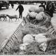 Селски пазари © Александрас Мацияускас